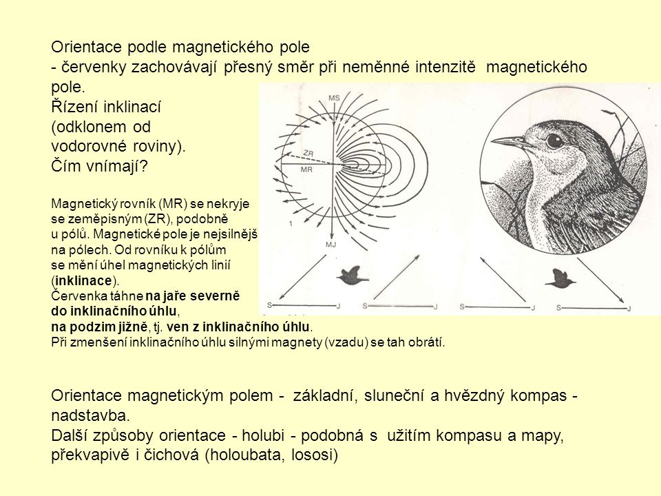 Orientace podle magnetického pole