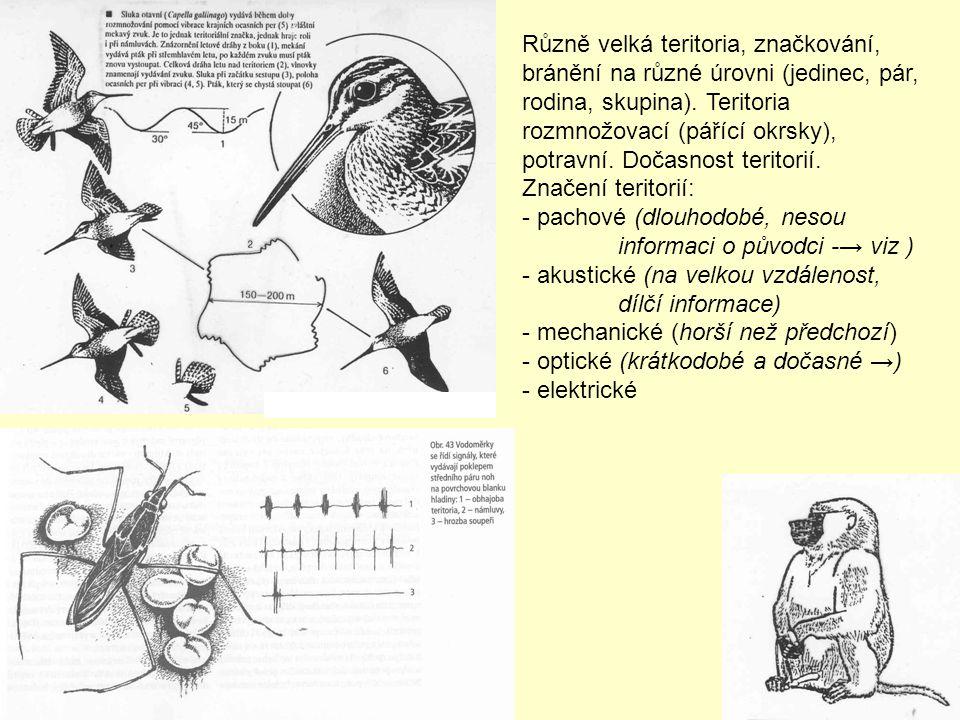Různě velká teritoria, značkování, bránění na různé úrovni (jedinec, pár, rodina, skupina). Teritoria rozmnožovací (pářící okrsky), potravní. Dočasnost teritorií.