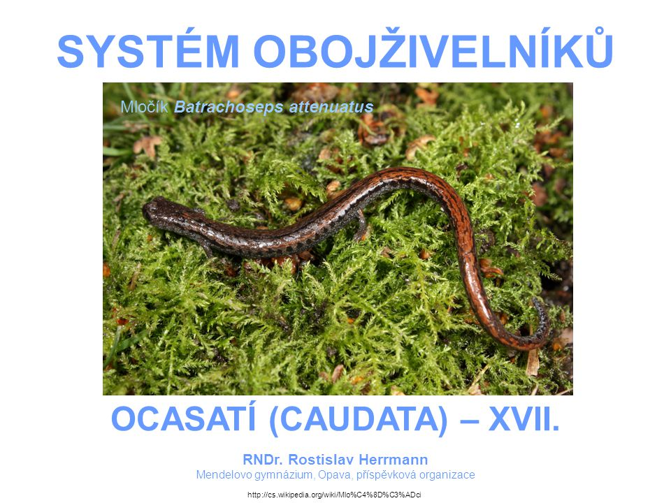 OCASATÍ (CAUDATA) – XVII. RNDr. Rostislav Herrmann