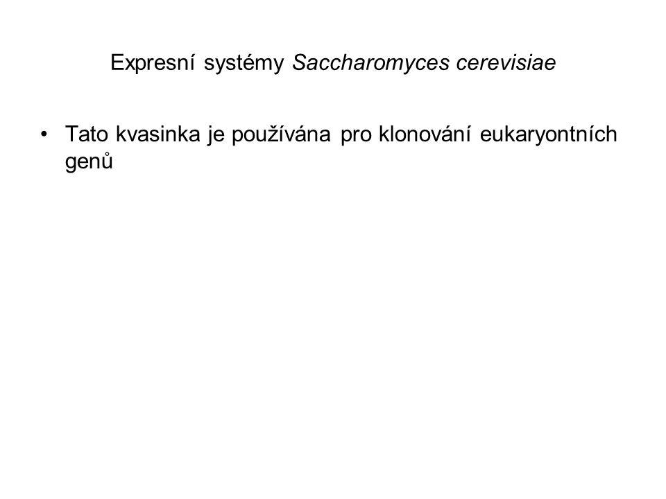 Expresní systémy Saccharomyces cerevisiae