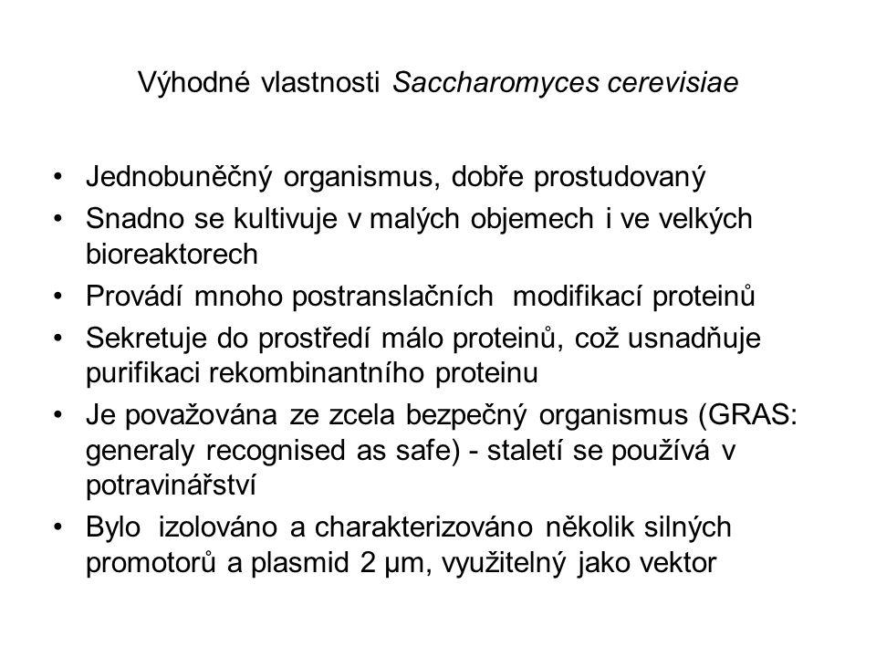 Výhodné vlastnosti Saccharomyces cerevisiae