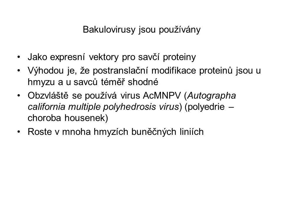 Bakulovirusy jsou používány