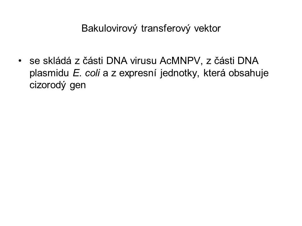 Bakulovirový transferový vektor