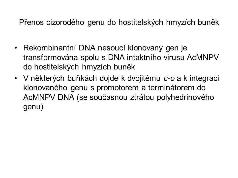 Přenos cizorodého genu do hostitelských hmyzích buněk
