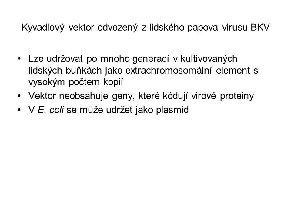 Kyvadlový vektor odvozený z lidského papova virusu BKV
