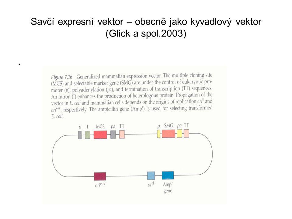 Savčí expresní vektor – obecně jako kyvadlový vektor (Glick a spol