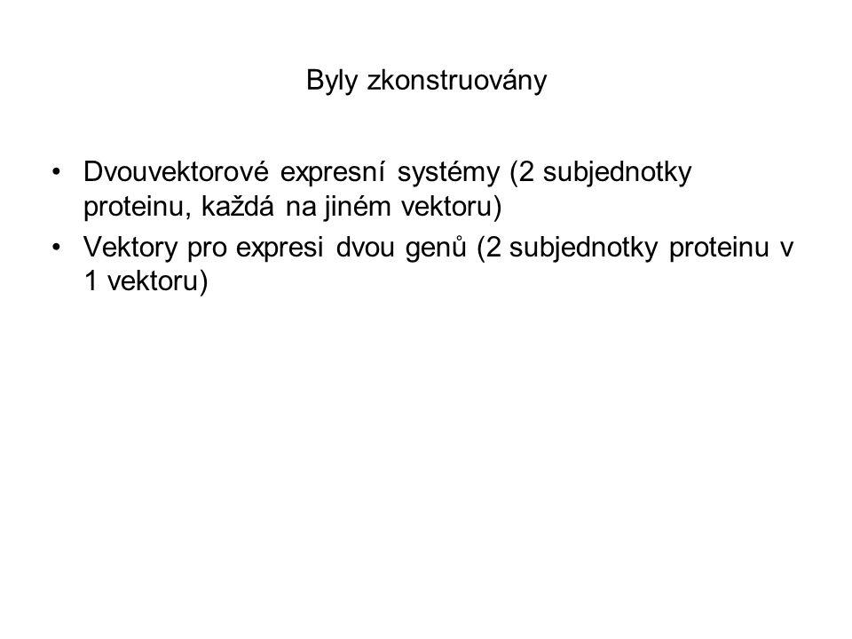 Byly zkonstruovány Dvouvektorové expresní systémy (2 subjednotky proteinu, každá na jiném vektoru)