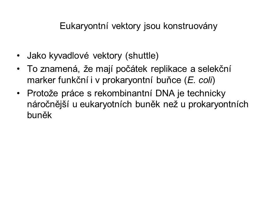 Eukaryontní vektory jsou konstruovány