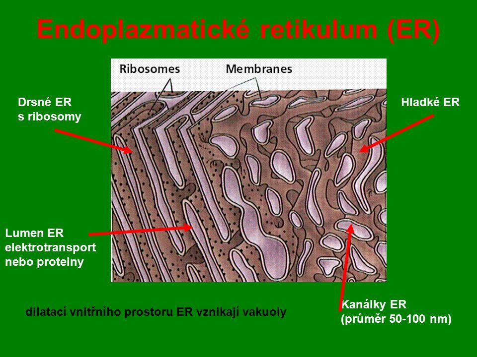 Endoplazmatické retikulum (ER)