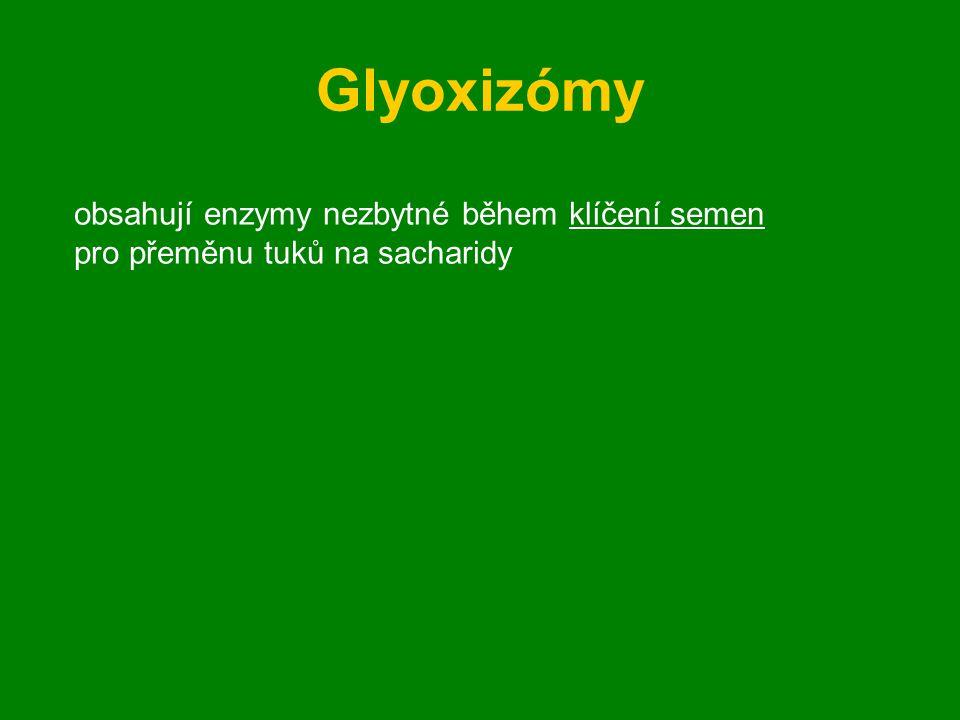 Glyoxizómy obsahují enzymy nezbytné během klíčení semen
