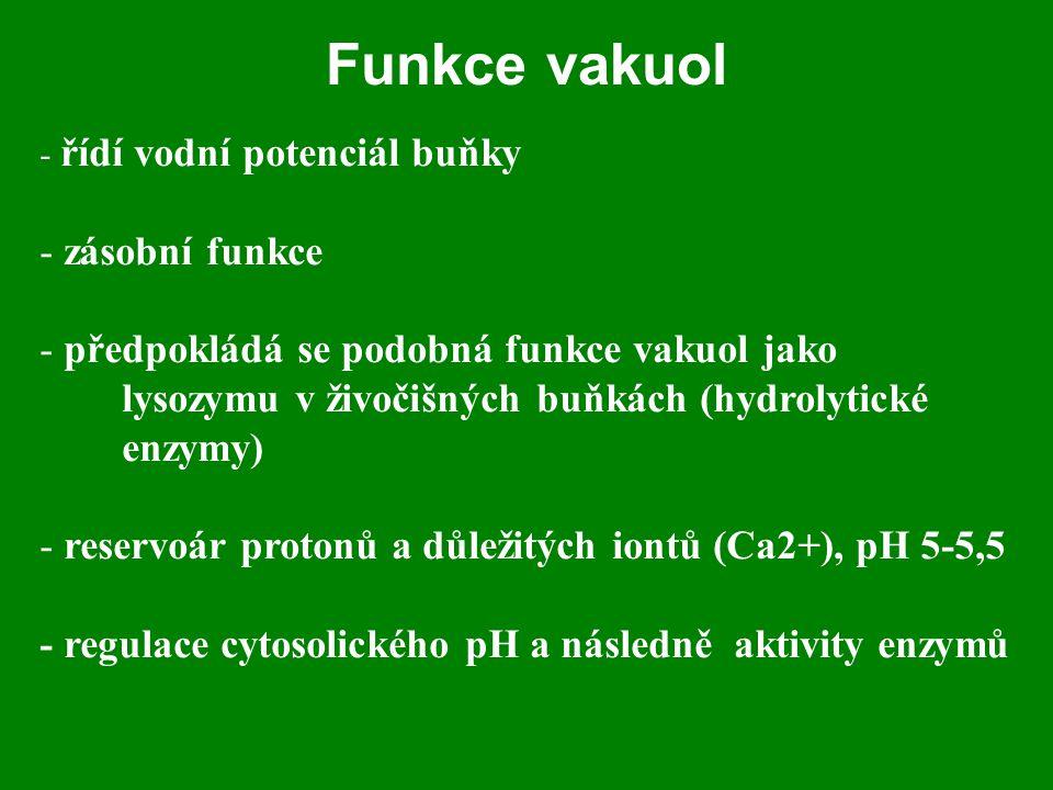 Funkce vakuol zásobní funkce předpokládá se podobná funkce vakuol jako