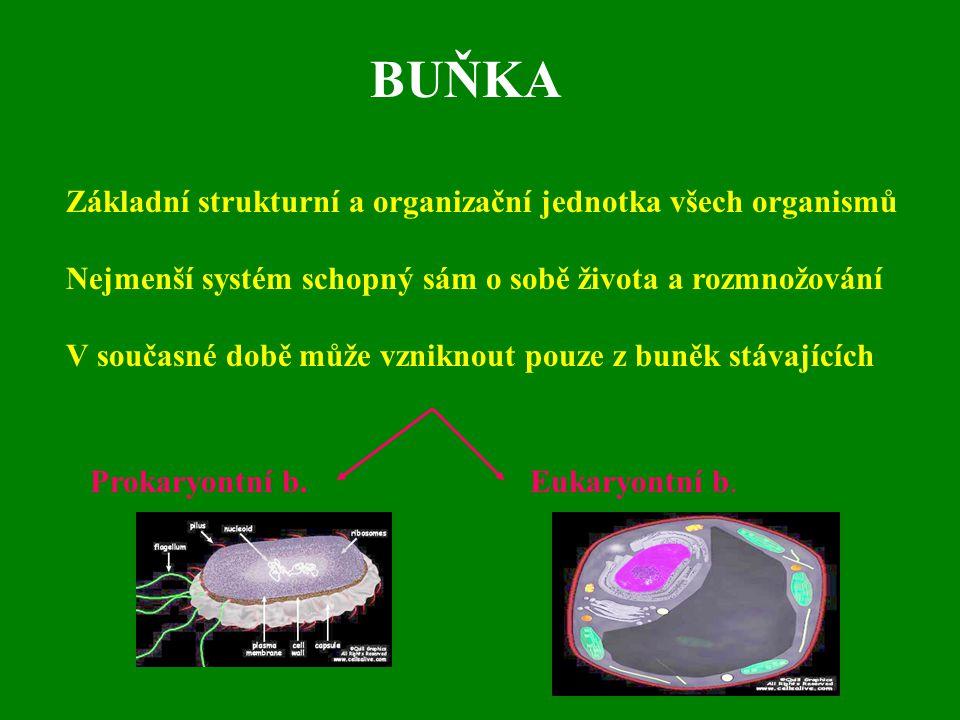 BUŇKA Základní strukturní a organizační jednotka všech organismů