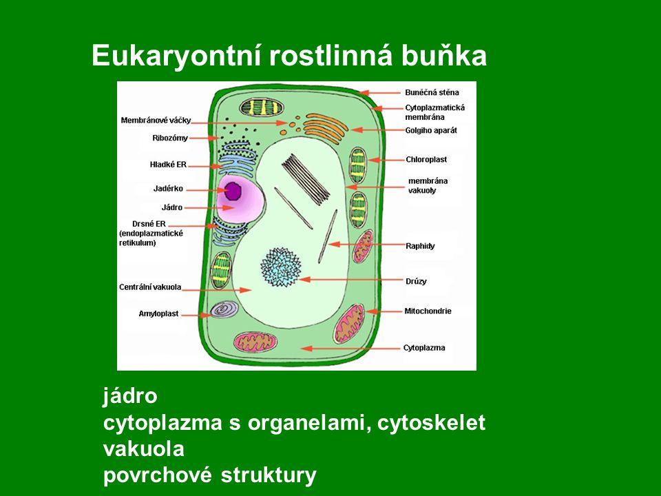 Eukaryontní rostlinná buňka
