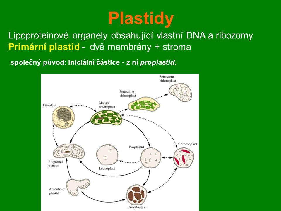 Plastidy Lipoproteinové organely obsahující vlastní DNA a ribozomy