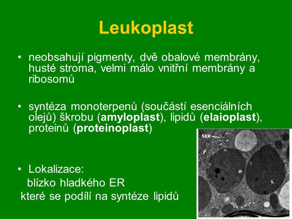 Leukoplast neobsahují pigmenty, dvě obalové membrány, husté stroma, velmi málo vnitřní membrány a ribosomů.