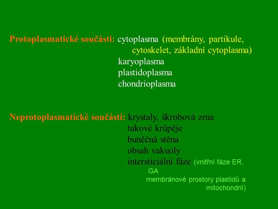 Protoplasmatické součásti: cytoplasma (membrány, partikule,