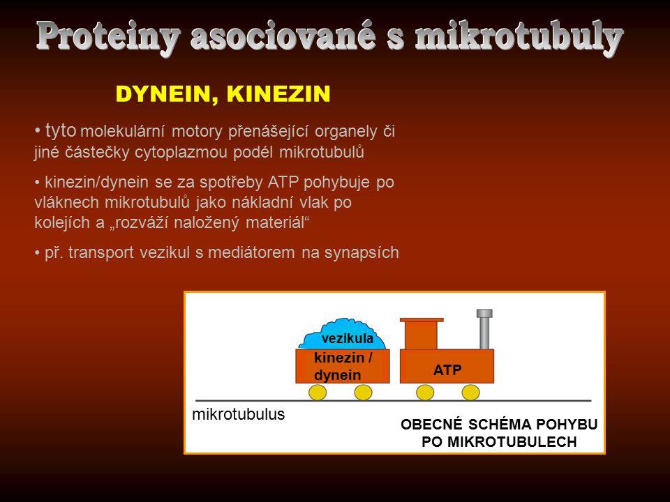 Proteiny asociované s mikrotubuly