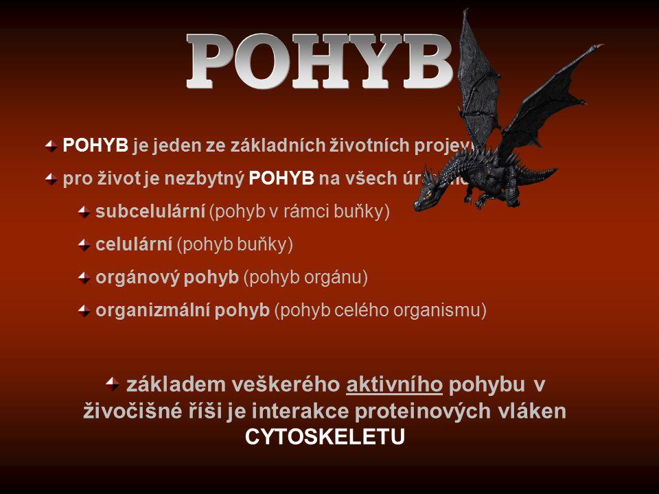 POHYB POHYB je jeden ze základních životních projevů. pro život je nezbytný POHYB na všech úrovních: