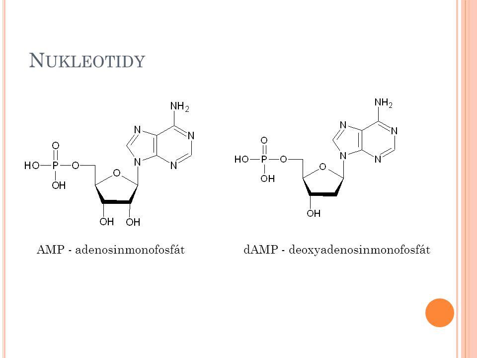 Nukleotidy AMP - adenosinmonofosfát dAMP - deoxyadenosinmonofosfát