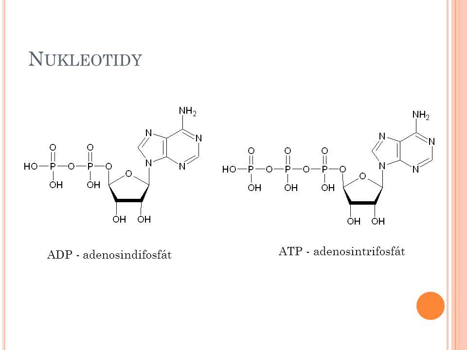 Nukleotidy ATP - adenosintrifosfát ADP - adenosindifosfát