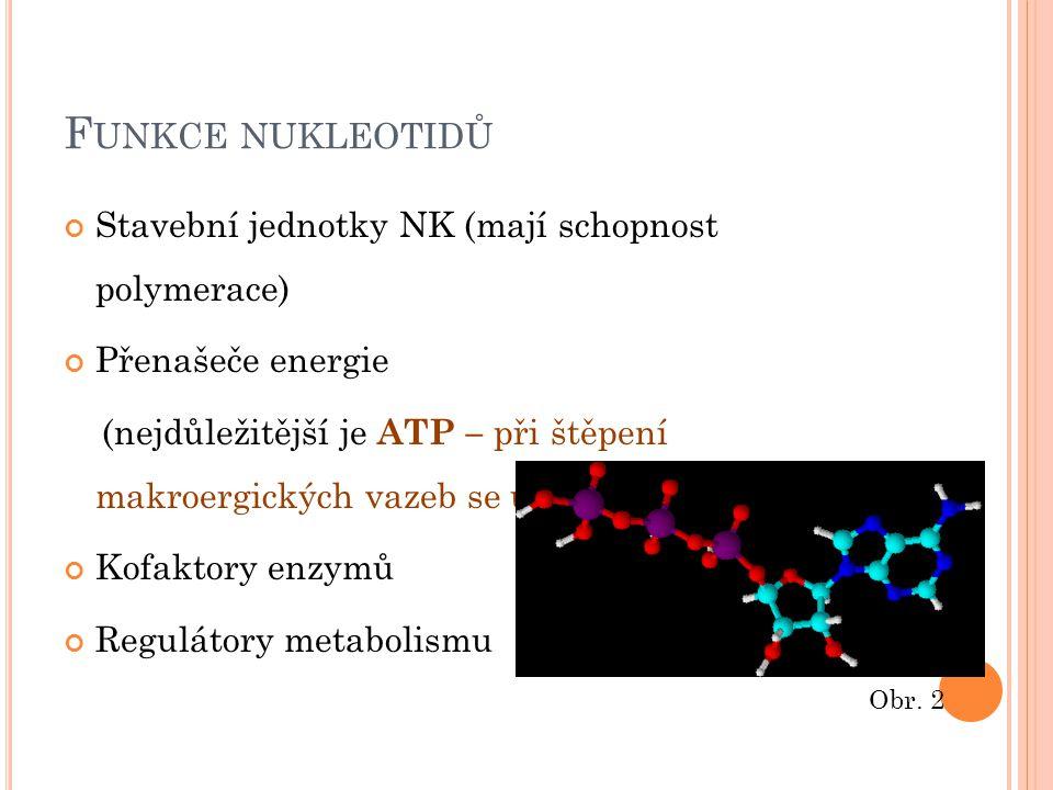 Funkce nukleotidů Stavební jednotky NK (mají schopnost polymerace)