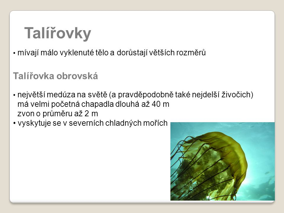 Talířovky Talířovka obrovská má velmi početná chapadla dlouhá až 40 m