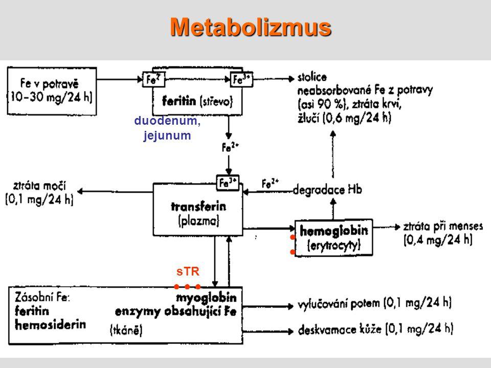 Metabolizmus + duodenum, jejunum ● sTR ● ● ●