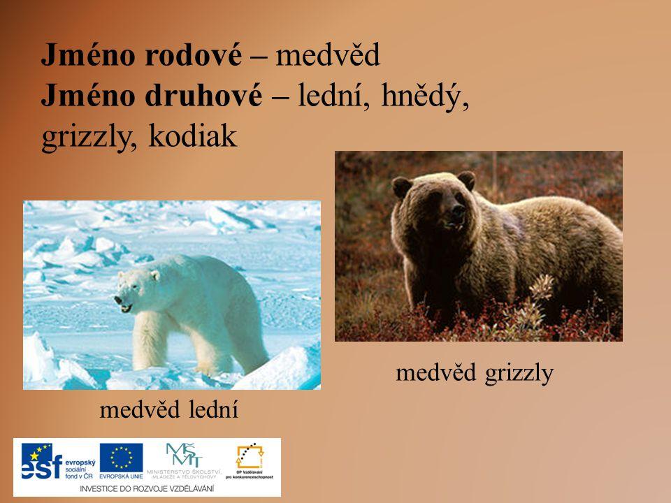 Jméno druhové – lední, hnědý, grizzly, kodiak