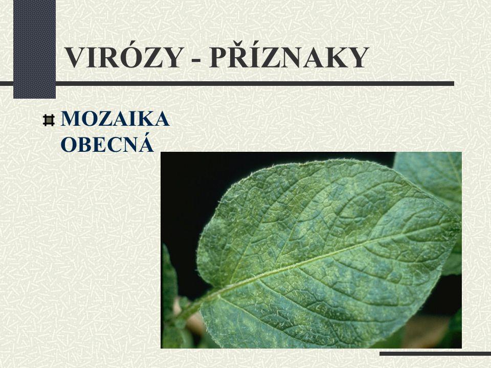 VIRÓZY - PŘÍZNAKY MOZAIKA OBECNÁ