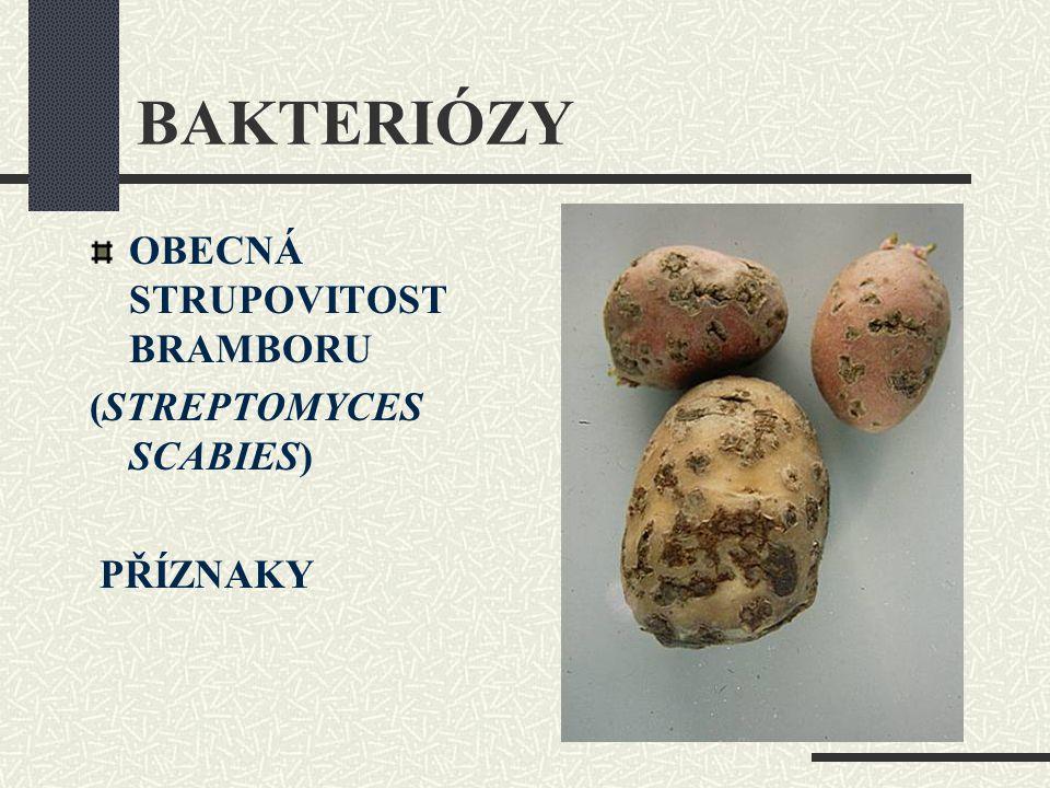 BAKTERIÓZY OBECNÁ STRUPOVITOST BRAMBORU (STREPTOMYCES SCABIES)