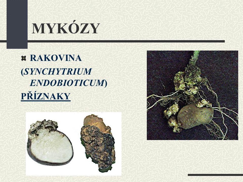MYKÓZY RAKOVINA (SYNCHYTRIUM ENDOBIOTICUM) PŘÍZNAKY