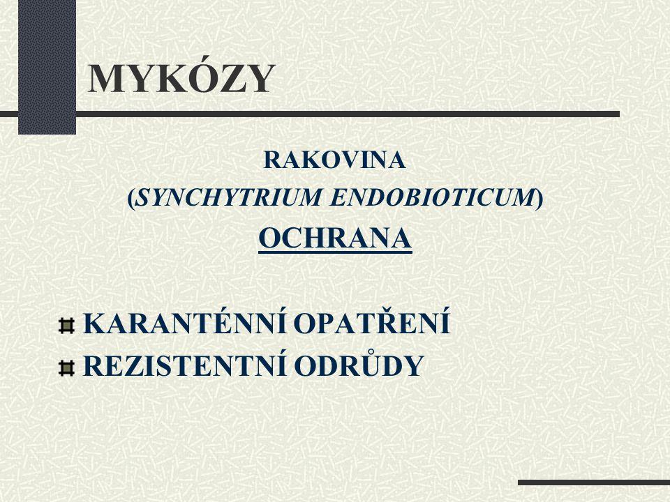 (SYNCHYTRIUM ENDOBIOTICUM)