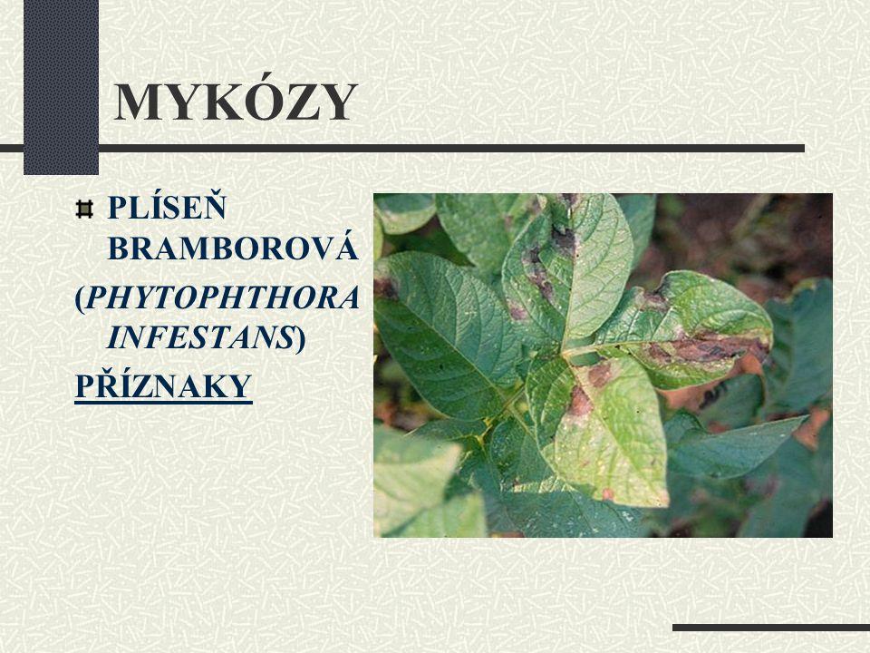 MYKÓZY PLÍSEŇ BRAMBOROVÁ (PHYTOPHTHORA INFESTANS) PŘÍZNAKY