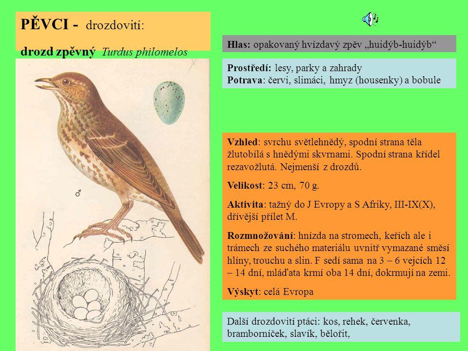 PĚVCI - drozdovití: drozd zpěvný Turdus philomelos