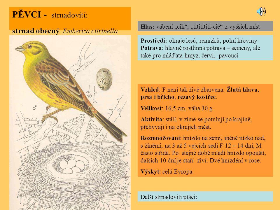 PĚVCI - strnadovití: strnad obecný Emberiza citrinella