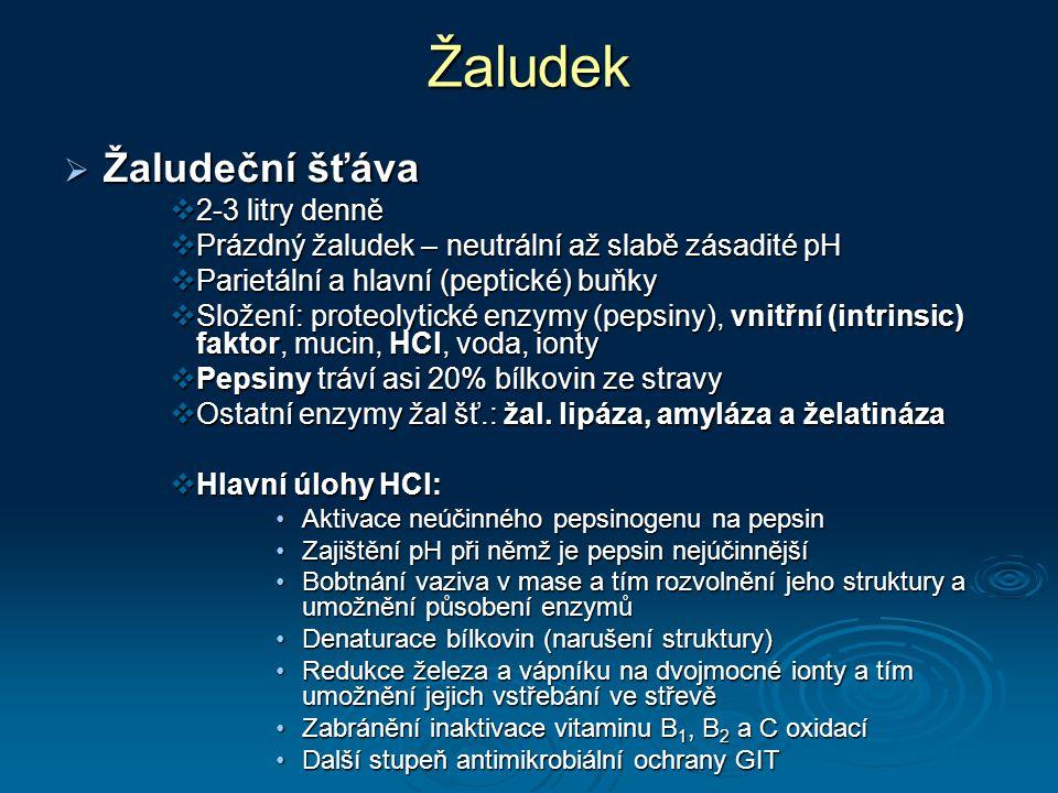 Žaludek Žaludeční šťáva 2-3 litry denně