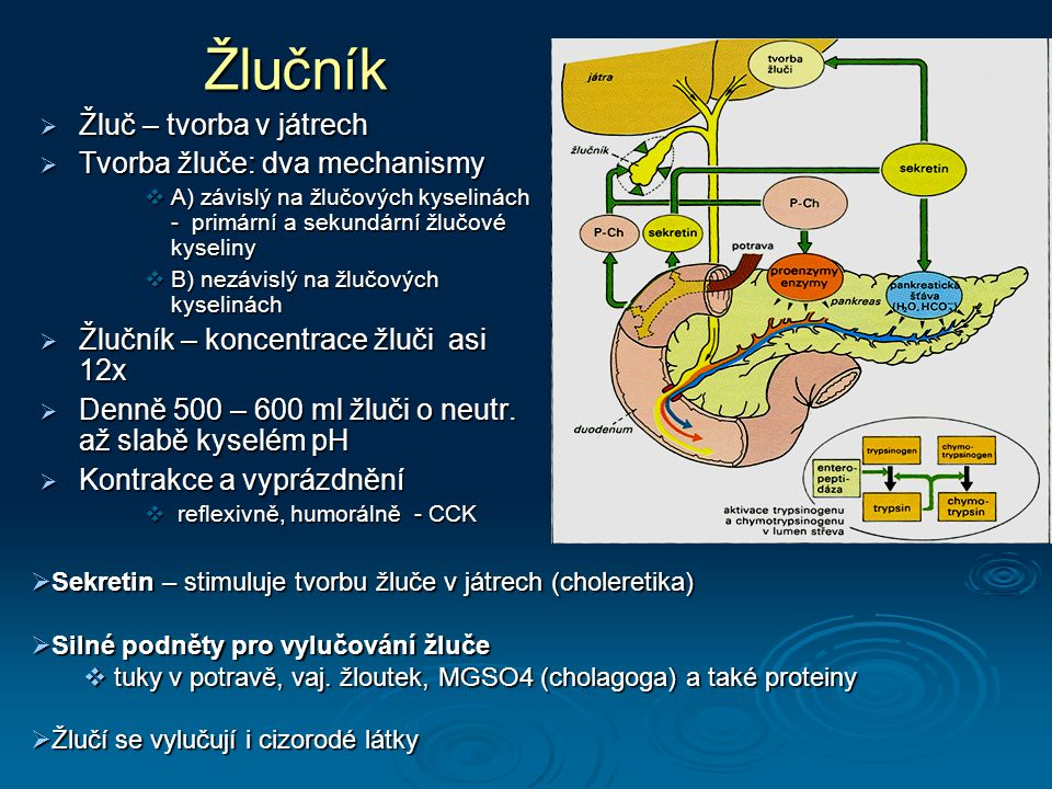 Žlučník Žluč – tvorba v játrech Tvorba žluče: dva mechanismy