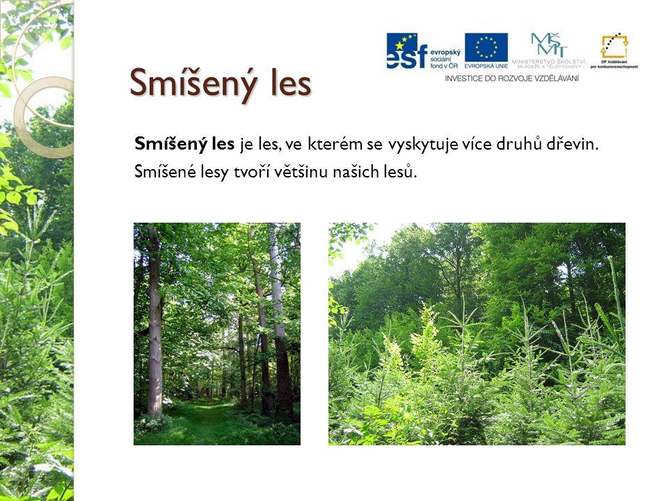 Smíšený les Smíšený les je les, ve kterém se vyskytuje více druhů dřevin.