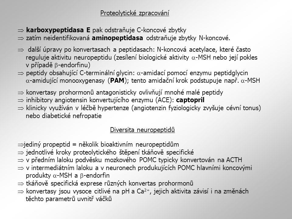 Proteolytické zpracování