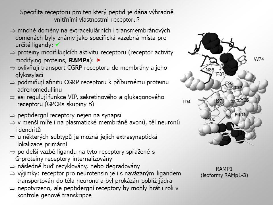 Specifita receptoru pro ten který peptid je dána výhradně vnitřními vlastnostmi receptoru
