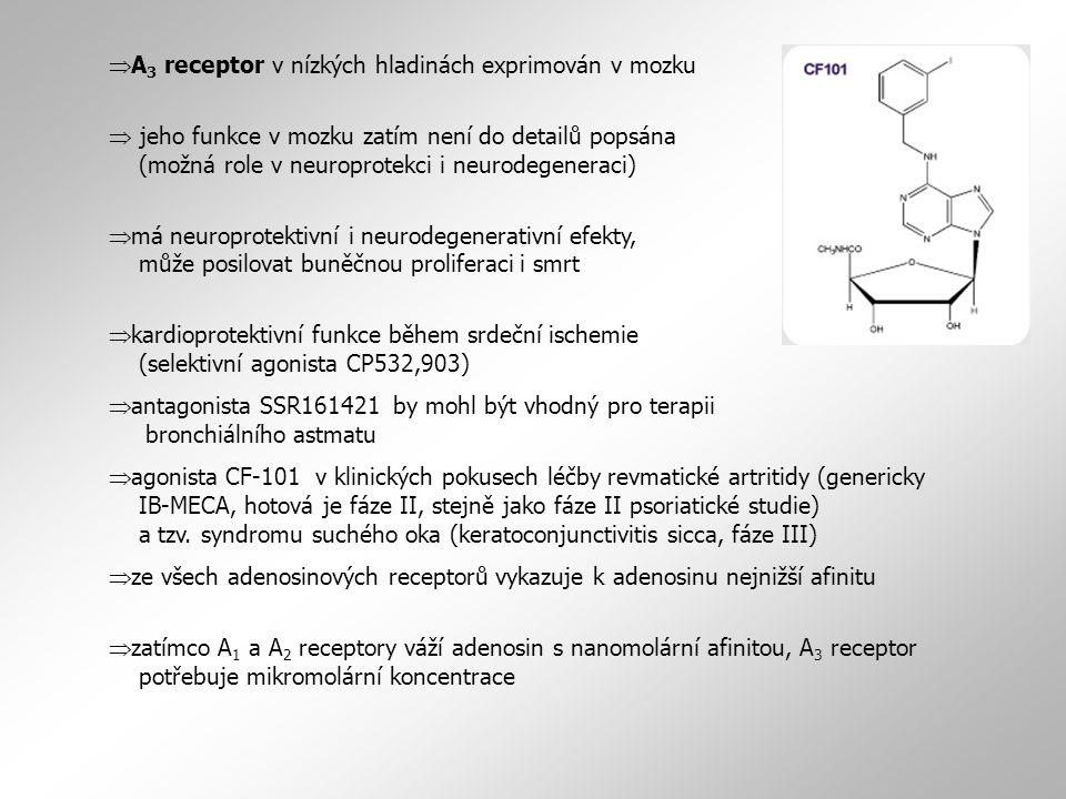 A3 receptor v nízkých hladinách exprimován v mozku
