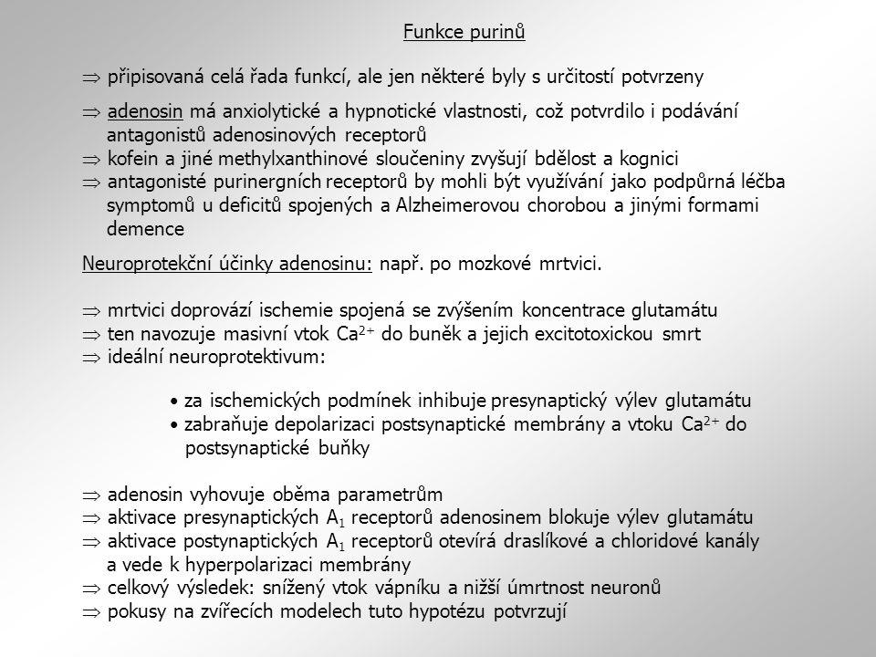 Funkce purinů  připisovaná celá řada funkcí, ale jen některé byly s určitostí potvrzeny.