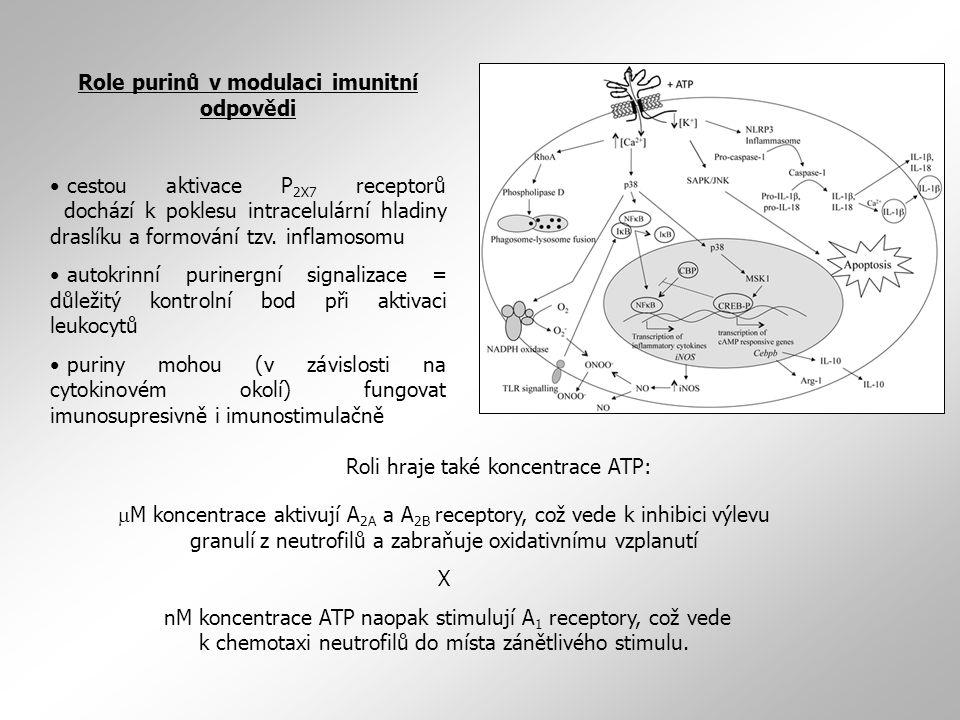 Role purinů v modulaci imunitní odpovědi