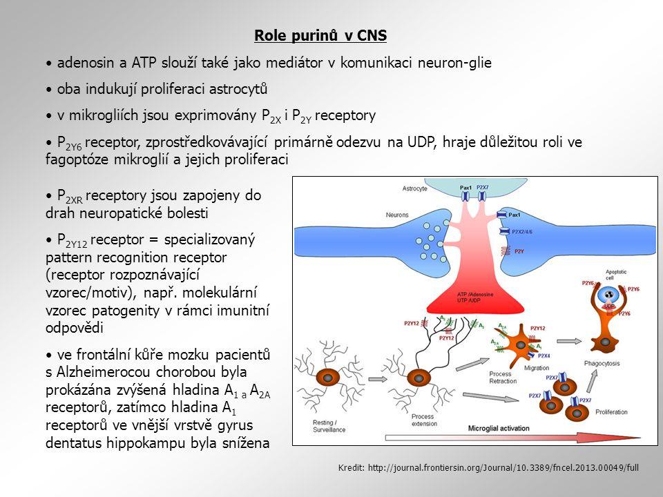 adenosin a ATP slouží také jako mediátor v komunikaci neuron-glie