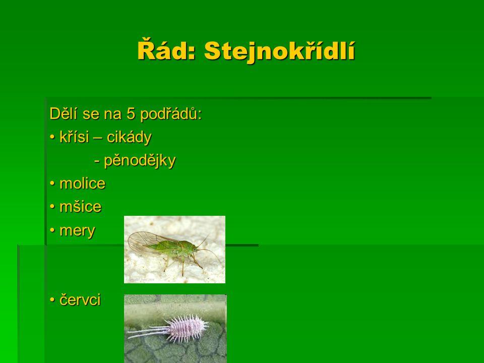 Řád: Stejnokřídlí Dělí se na 5 podřádů: • křísi – cikády - pěnodějky