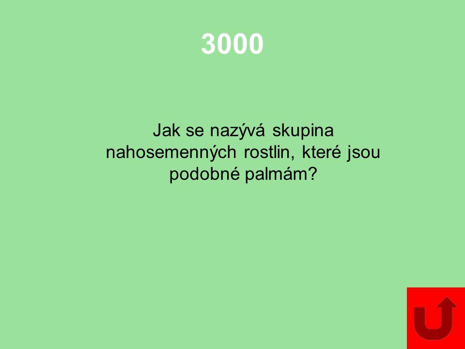 3000 Jak se nazývá skupina nahosemenných rostlin, které jsou podobné palmám