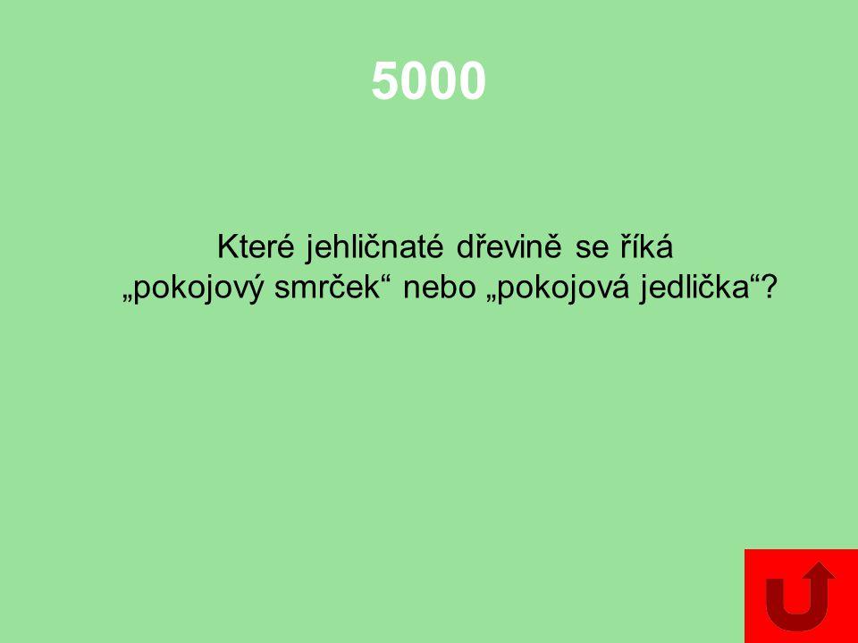 5000 Které jehličnaté dřevině se říká