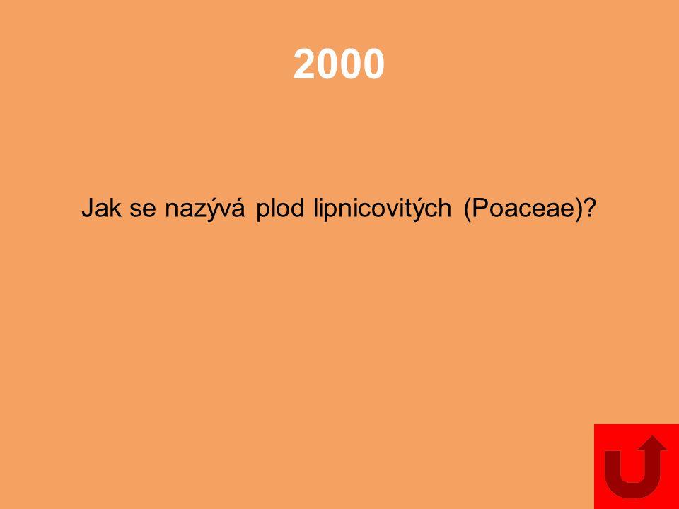 Jak se nazývá plod lipnicovitých (Poaceae)