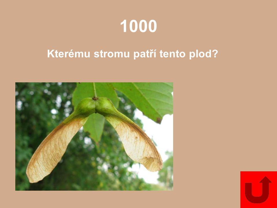 Kterému stromu patří tento plod