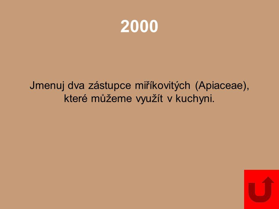 2000 Jmenuj dva zástupce miříkovitých (Apiaceae), které můžeme využít v kuchyni.